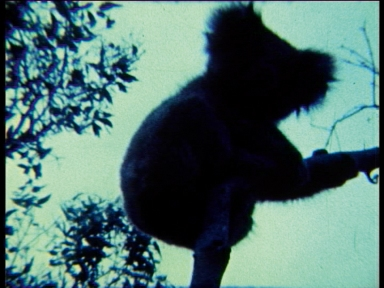 Natascha Stellmach, Still from Oi Oi Oi, 2006, Super 8 film transferred to video, sound, 3:30 min video loop